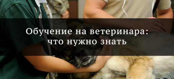 Как выбрать ветеринарные колледжи?