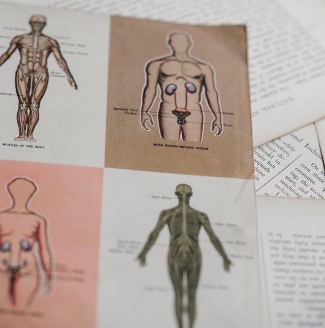ОГЭ по биологии: как подготовиться к экзамену