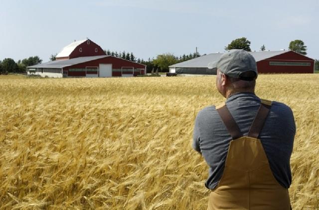 «Агроинженерия»: обучение, профессия и кем работать